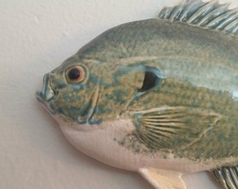 Large Green Sunfish, Green and White - 0104