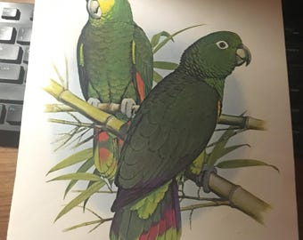 Scaly napped parrot. Book page image print 9.5 x 12 approx. will look great when framed. Tropical feel immediately.
