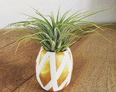 Pineapple vase air plant, desk plant, air plant gift, Christmas gift, gift under 15, housewarming, welcome, office, co-worker gift