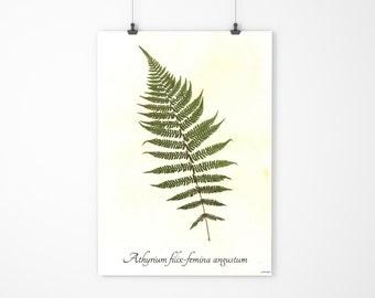 Lady Fern Art- Real Pressed Fern Art - Pressed Botanical Herbarium Specimen - Garden Art Home Decor