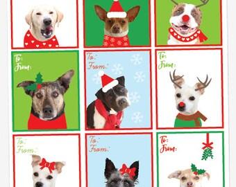 Gift Tag, Dog Gift tag, Christmas gift tag, Dog Christmas card, dog card, christmas, christmas card, diy, instant download
