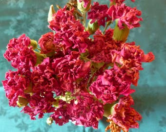 Real Dried Carnations Bouquet Red- 15+ Flowers on Stems-Naturally Air Dried