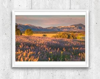 Plateau de Valensole, Provence, France – Fine Art Print