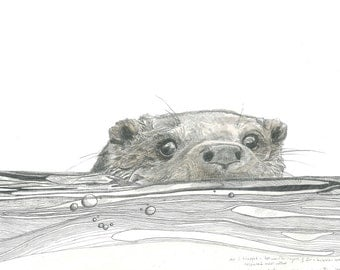 Print - Otter in Water