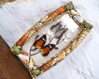 Butterflies sea shells shadow box framed Vintage French european butterfly picture wall hanging taxidermy