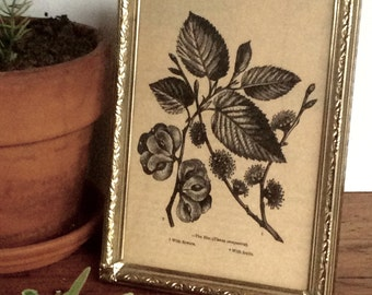 Vintage Brass  Picture Frame with Elm Tree Print / Elm Tree Drawing in Brass Frame