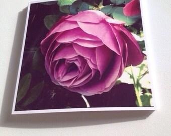 Square Greeting Card - Rose