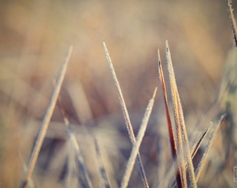 Grass photography, Brown and beige, Nature photography, Office neutral decor, Macro photography, Rustic home décor, Dining room art