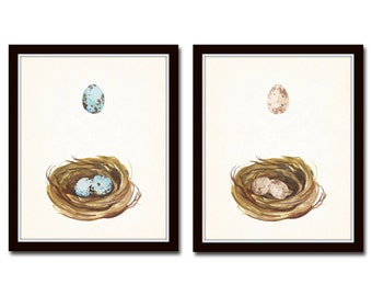 Watercolor Nest and Egg Print Set, Giclee, Wall Art, Egg Prints, Bird Nest Prints, Illustration, Eggs, Collage, Bird Eggs, Watercolor Art
