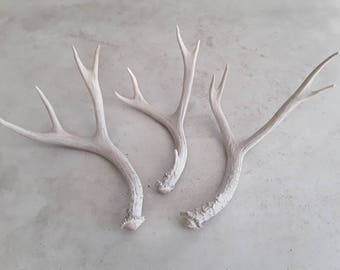 Three real deer antlers design decor crafts art centerpiece gift rustic natural antler sheds lamp display
