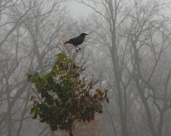 Wildlife Print, Raven Photo, Monochromatic Fine Art Photography, Art Prints, Nature Photography, Bird of Prey