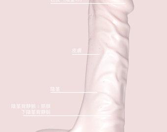 Anatomy of a penis digital print (Japanese)