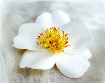 Cherokee rose etsy for Cherokee rose