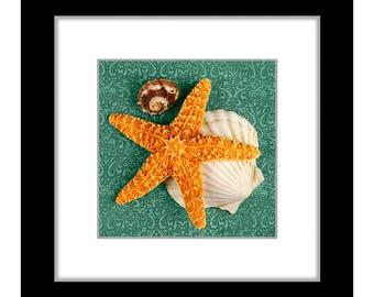 Sea Shells 6