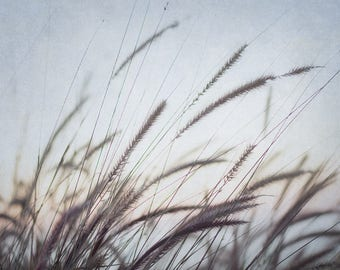 Seagrass Photograph, Grass Photo, Dreamy Coastal Wall Art, Nature Photography, Blue and Brown Artwork, Cape Cod Decor, Oversized Art