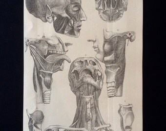 Antique Engraving ANATOMY Dissection SKULL BONE Cranium Bookplate 1873 Victorian Vintage Print 1870s