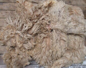 Mule Raw (Unwashed) Full Fleece  for Spinning and Crafts
