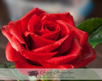 Red Rose - Polymer Clay Flowers
