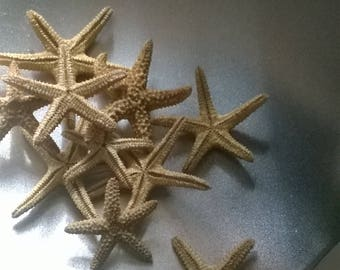 Miniature Starfish- tan in color--Set of Two--Great in your Terrarium or Fairy Garden