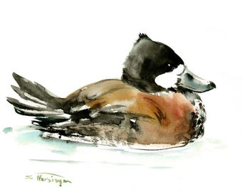Ruddy Duck, original watercolor painting, ducks, duck art, duck painting