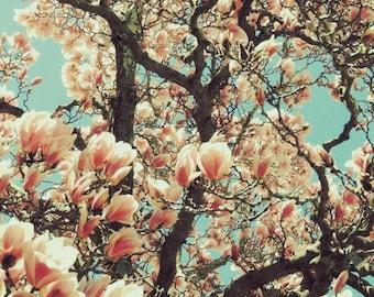 April Pink Magnolia - Nature Art - Spring Flower - Flowering Tree - Wall Decor - New York Magnolia - Botanical Art -  Nature Photograph
