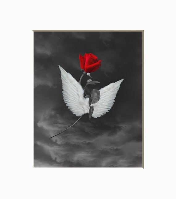 black white red rose wall art photography red rose angel. Black Bedroom Furniture Sets. Home Design Ideas