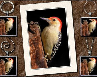 Woodpecker Photo Note Card Set - Woodpecker Pendant, Woodpecker Keyring, Woodpecker Ornament, Woodpecker Wine Charm - Greeting Card (GP78)