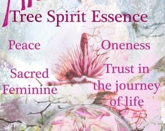 Magnolia Tree Spirit Essence