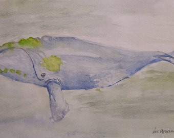 Right whale watercolor sketch.