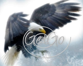 Eagle Photography Eagle Bird Photo, Instant Photo Download, Digital Download, - Nature Photo, Photo Print Photo Printable Photo Download
