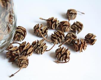 Natural Pine Cones, Mini Pine Cones, 100 TINY Pine Cones, Wooden Pine Cones