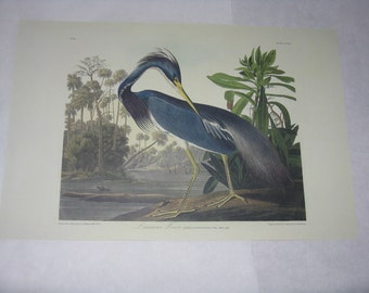 Audubon print unframed bird Louisiana Heron reproduction