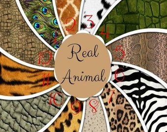Real Animal, Safari Leopard, Zebra, Cheetah, Alligator Adhesive 651 Vinyl, HTV or Glitter HTV Decals