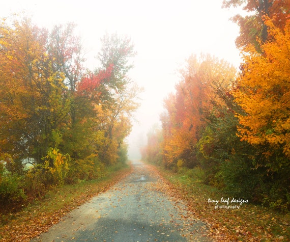 Country Road During Peak Foliage Original Photography