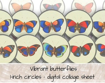 Vibrant Butterflies Paper Black Border 1 inch circles digital collage sheet 0031