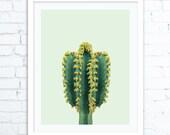 cactus decor, Cactus Print, Cactus Art, Succulent Print, Printable Cacti, Desert Photography, Instant Download, Cactus Wall Art