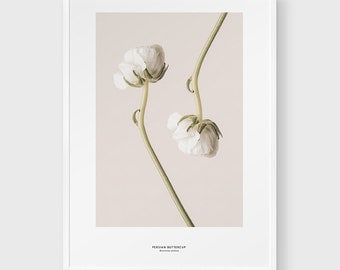 Flower Print. Ranunculus Photography - PRINTABLE FILE. Floral Wall Décor. Persian Buttercup. Fade Pink Flower Print. Botany Poster.