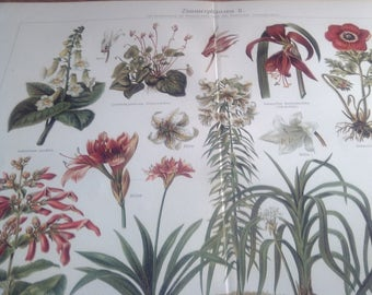 "Chromolithograph ""indoor plants II."""