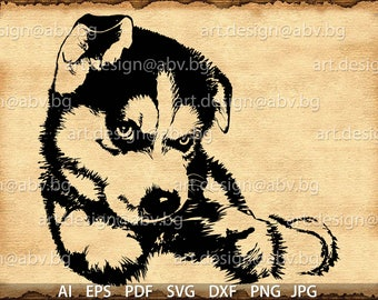 Vector DOG, husky baby, AI, eps, pdf, svg, dxf, png, jpg Download, Digital image, graphical, dhole, animal, discount coupons