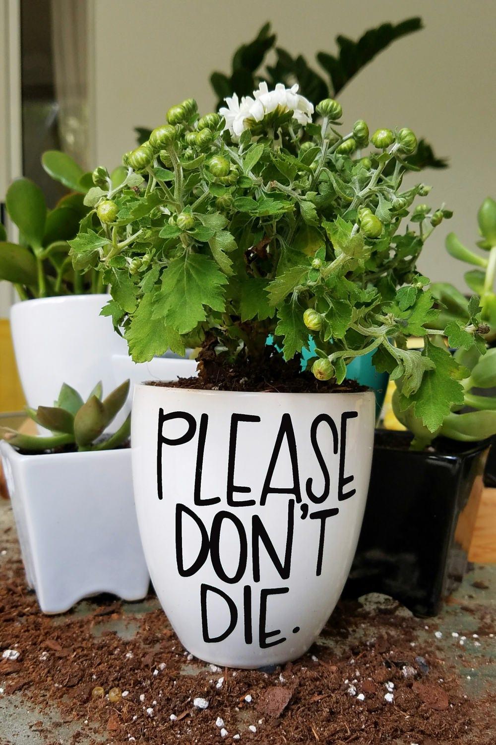 Please don 39 t die planter hand lettered planter funny for Gardening 7 days to die