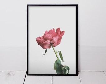Wilt - Art Print