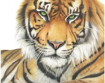 Tiger -  Art print.