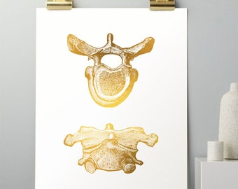 Chiropractic Art - Gold Foil Print - Vertebrae Art Print - Chiropractor Gifts, Spine Anatomy, Anatomy Art, Anatomical Real Gold Foil