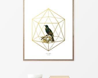 Printable Art, Tui Bird, Posters, Wall Art Print,s Geometric Art, Prints, wall art, Diy Moodern Art, Modern Vintage Art Prints, Poster, Art.