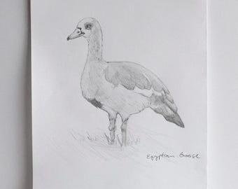 Egyptian Goose, original drawing