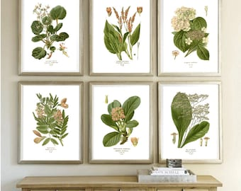 Plant Print - Flowers Wall Art - Leaves Print - Botanical Wall Art Print - Living Room Decor - Home Decor - Kitchen Poster - Green