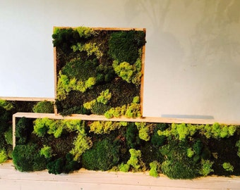 Tiny forest in a wooden box