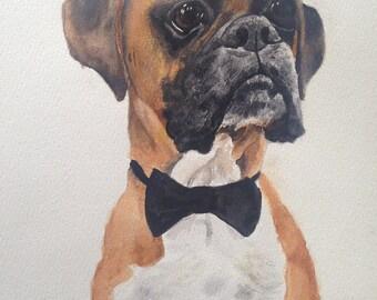 pet/animal portrait