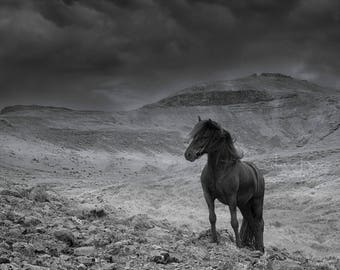Better Things Ahead in Black and White - Horse Photography (Large Equine Fine Art Print)
