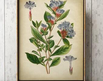 Botanical poster, botanical print, botanical chart study poster, flower art, botanical art, flower print, violet flowers, floral drawing